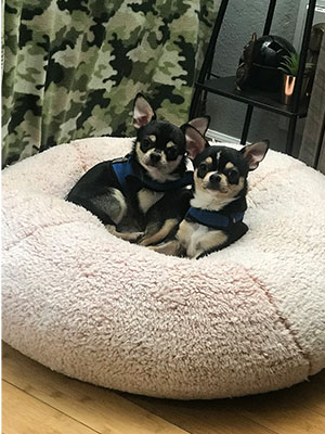 Two chihuahuas resting on a cushion.