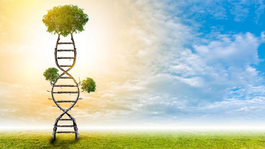 Illustration of sky, tree, and DNA molecule.